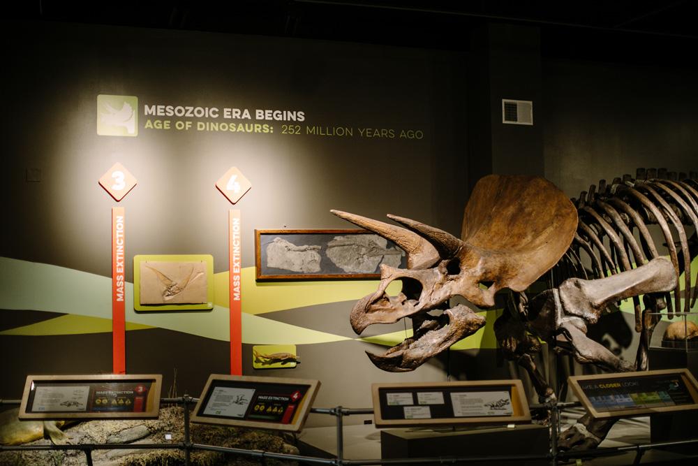rethink extinct grid first - Rethink Extinct
